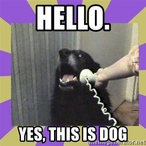 Yes, this is dog! - HELLO. YES, THIS IS DOG
