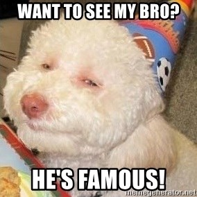 Troll dog - WANT TO SEE MY BRO? HE'S FAMOUS!