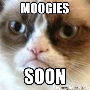 angry cat asshole - MOOGIES SOON