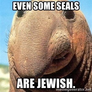 Lolwut - Even some seals are jewish.