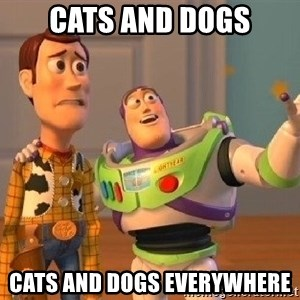 Consequences Toy Story - cats and dogs cats and dogs everywhere