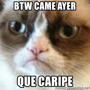 angry cat asshole - btw came ayer que caripe