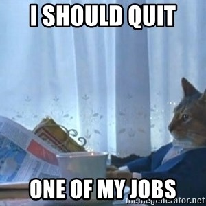 Suit cat - i should quit  one of my jobs