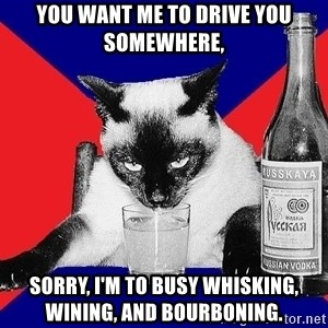 Alco-cat - YOU WANT ME TO DRIVE YOU SOMEWHERE, SORRY, I'M TO BUSY WHISKING, WINING, AND BOURBONING.