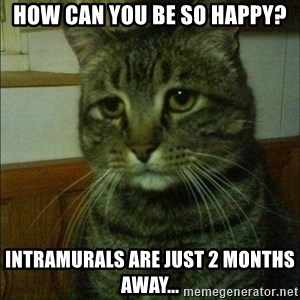 Depressed cat 2 - how can you be so happy? Intramurals are just 2 months away...