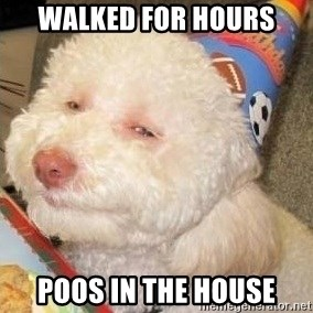 Troll dog - walked for hours poos in the house