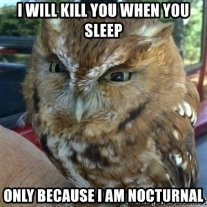 Overly Angry Owl - I WILL KILL YOU WHEN YOU SLEEP ONLY BECAUSE I AM NOCTURNAL
