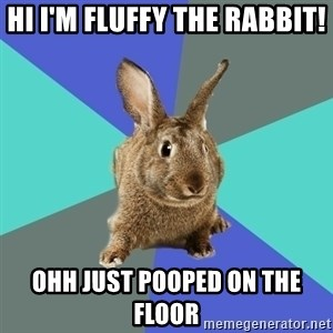 Roommate Rabbit - HI I'M FLUFFY THE RABBIT! OHH JUST POOPED ON THE FLOOR