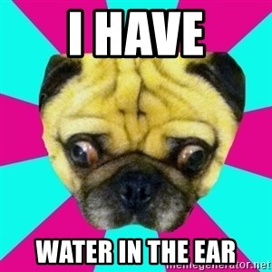 Perplexed Pug - i have water in the ear