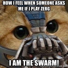 bane cat - How i feel when someone asks me if i play zerg i am the swarm!