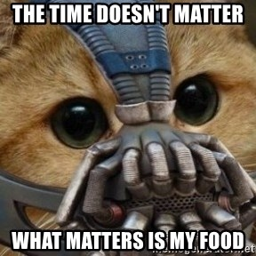 bane cat - THE TIME DOESN'T MATTER WHAT MATTERS IS MY FOOD
