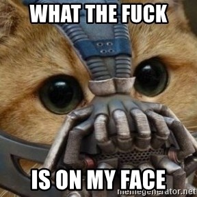 bane cat - WHAT THE FUCK  IS ON MY FACE