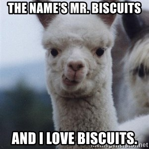 alpaca - The name's Mr. Biscuits and I love biscuits.