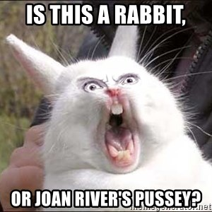 Rabbit On Alert - is this a rabbit, or Joan river's pussey?