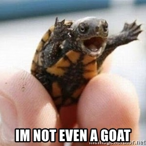 angry turtle - im not even a goat