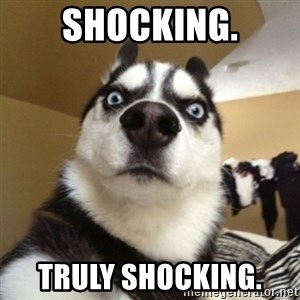 Surprised Husky - Shocking. Truly Shocking.