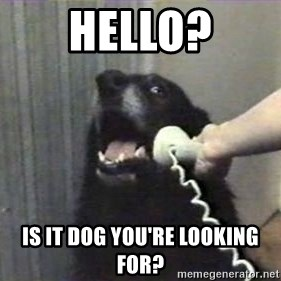 hello? yes this is dog - Hello? Is it dog you're looking for?