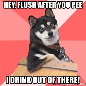 Cool Dog - hey, flush after you pee i drink out of there!