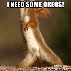 dramatic squirrel - I need some Oreos!