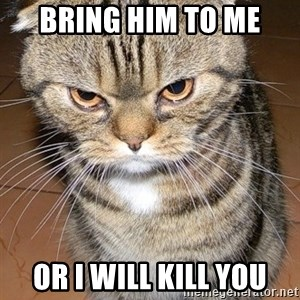 angry cat 2 - bring HIM TO ME OR I WILL KILL YOU