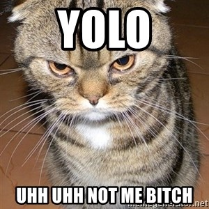 angry cat 2 - yolo uhh uhh not me bitch