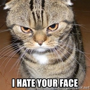 angry cat 2 -  I HATE YOUR FACE