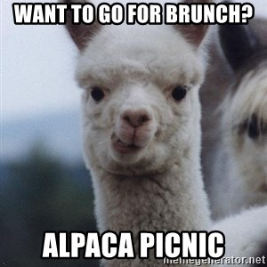 alpaca - Want to go for brunch? alpaca picnic