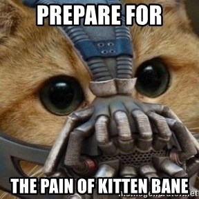 bane cat - prepare for the pain of kitten bane