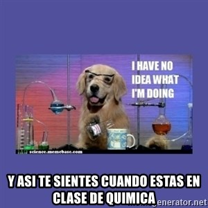 I don't know what i'm doing! dog -  y asi te sientes cuando estas en clase de quimica