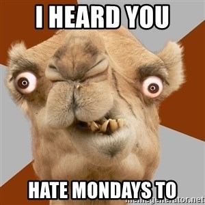 Crazy Camel lol - I HEARD YOU  HATE MONDAYS TO