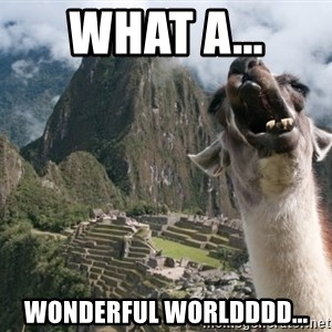 Bossy the Llama - what a... wonderful worldddd...