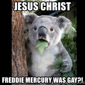 Koala can't believe it - Jesus christ freddie mercury was gay?!