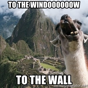 Bossy the Llama - TO THE WINDOOOOOOW TO THE WALL