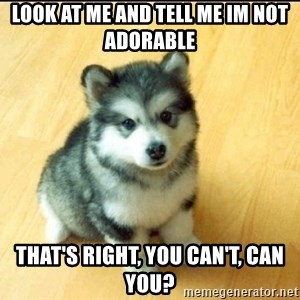 Baby Courage Wolf - Look at me and tell me im not adorable that's right, you can't, can you?