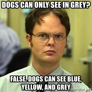 Dwight Schrute - Dogs can only see in grey? FALSE. Dogs can see blue, yellow, and grey