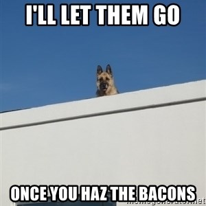 Roof Dog - I'll let them go Once you haz tHe bacons