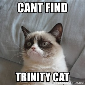 moody cat - cant find trinity cat