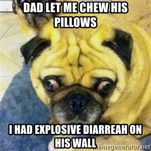 Perplexed Pug - Dad let me Chew his pillows I had exPlosive diarreah on his waLl