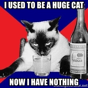 Alco-cat - I USED TO BE A HUGE CAT NOW I HAVE NOTHING