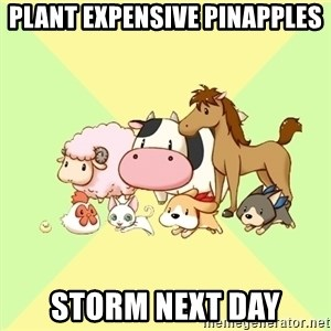 Harvest Moon - plant expensive pinapples storm next day
