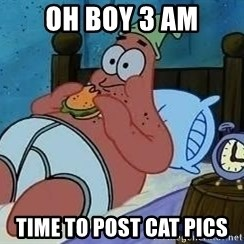 Patrick Star 3 am - oh boy 3 am time to post cat pics