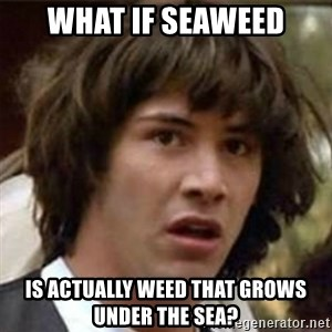what if meme - What if seaweed is actually weed that grows under the sea?