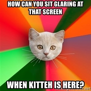 Advice Cat - how can you sit GLARING at that screen when kitteh is here?