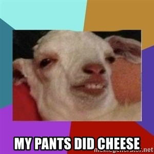 High goat -  My pants diD cheese