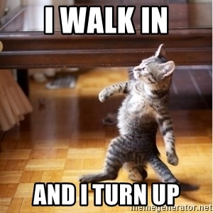 walking cat - I walk in and i turn up