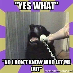 """Yes, this is dog! - """"YES WHAT"""" """"NO I DON'T KNOW WHO LET ME OUT"""""""