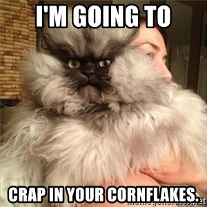 Colonel Meow - I'M GOING TO CRAP IN YOUR CORNFLAKES.