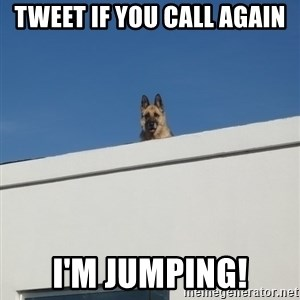 Roof Dog - Tweet if you call again I'm jumping!