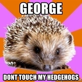 Homeschooled Hedgehog - George dont touch my hedgehogs