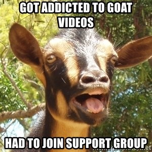Illogical Goat - got addicted to goat videos had to join support group